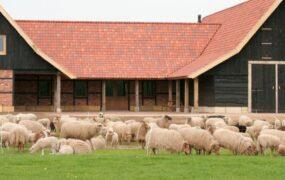 Schaapskooi Denekamp, een plek voor dier en mens