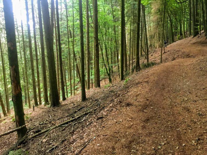 Teutoburgerwald MTB